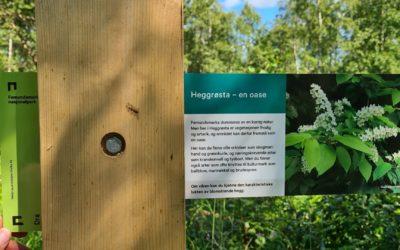 Natur- og opplevelsessti i Heggrøsta